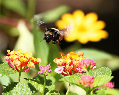 Art Print featuring the photograph Happy Bee by Luana K Perez