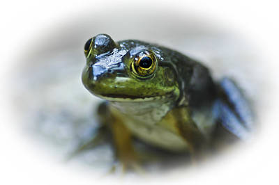 Photograph - Happy Green Frog by Carolyn Marshall
