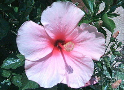 Photograph - Happy Hibiscus by Barbara Plattenburg