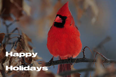 Photograph - Happy Holidays 1 by Mike Martin