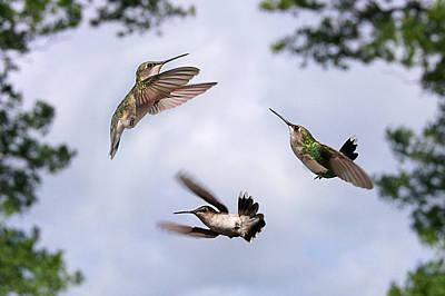 Photograph - Happy Hummer Confluence by Bill Pevlor