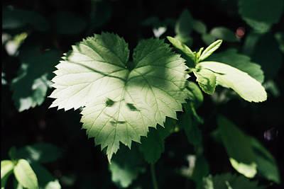 Photograph - Happy Leaf Spirit by Cathie Douglas