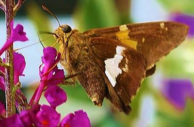 Photograph - Happy Moth by Bruce Bley