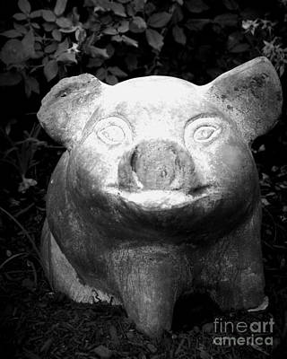 Photograph - Happy Pig by J Kinion