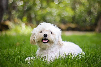 Photograph - Happy Puppy by Asta Viggosdottir