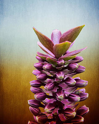 Photograph - Happy Purple Pods by Michael Taggart