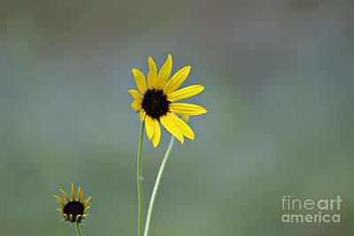 Photograph - Happy Sun by Shawn Naranjo