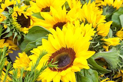 Happy Sunflowers Art Print by Dina Calvarese