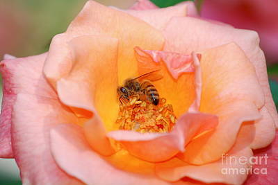 Art Print featuring the photograph Hard At Work by Kathy Gibbons