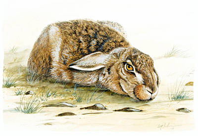 Hare Trying To Hide Original by Dag Peterson