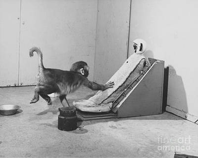 Harlow Monkey Experiment Art Print by Science Source