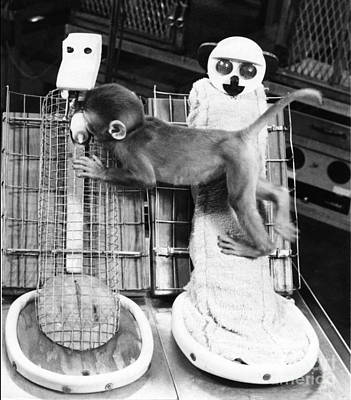 Harlows Monkey Experiment Art Print by Photo Researchers, Inc.