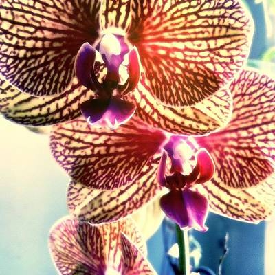 Orchids Photograph - Harold's Laura by S Michelle Reese