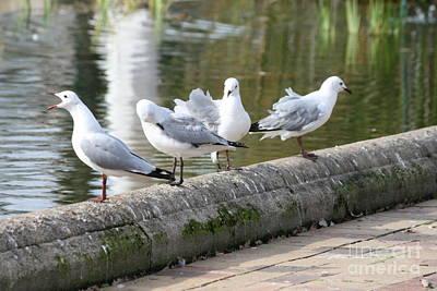 Wall Art - Photograph - Hartlaub's Gulls by Judith Hochroth