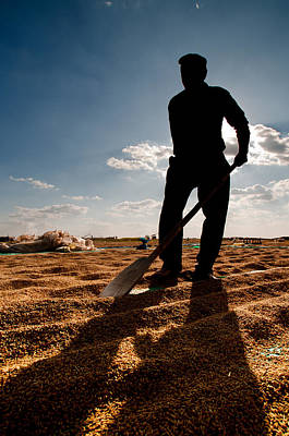 Harvest - 3 Original by Okan YILMAZ