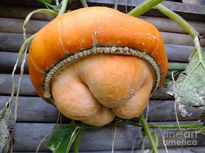 Photograph - Harvest- A Weird Pumpkin by Ausra Huntington nee Paulauskaite