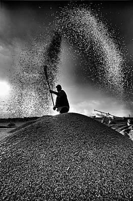 Photograph - Harvest by Okan YILMAZ