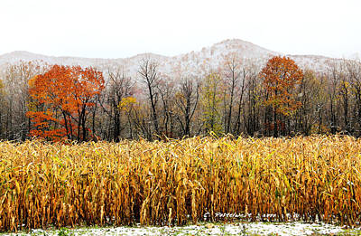 Harvest Snow Print by Carolyn Postelwait