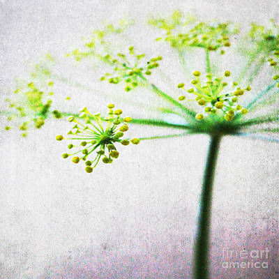 Floral Royalty-Free and Rights-Managed Images - Harvest Starburst 2 by Linda Woods