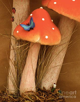 Photograph - Harvesting Mushrooms by Louise Fahy