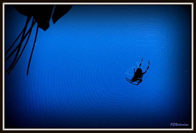 Photograph - Harvestman by Priscilla Richardson