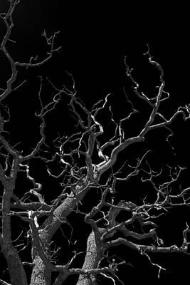 Haunted Tree # 2 Original by Lloyd Scott