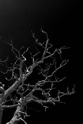 Haunted Tree # 3 Original by Lloyd Scott