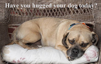 Photograph - Have You Hugged Your Dog Today? by Jeannette Hunt