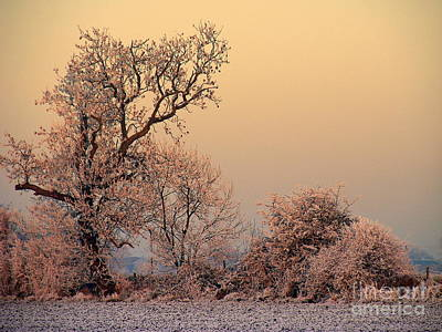 Frost 2 Art Print by Linsey Williams