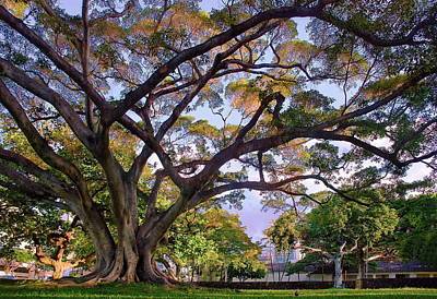 Photograph - Hawaii Tree by Dave Dilli