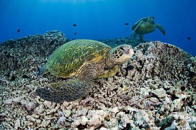 Sea Turtle Photograph - Hawaiian Green Sea Turtle by Dave Fleetham