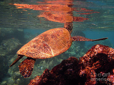 Photograph - Hawaiian Honu Reflections by Bette Phelan