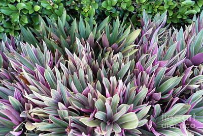 Photograph - Hawaiian Plants by Dawn Hough Sebaugh