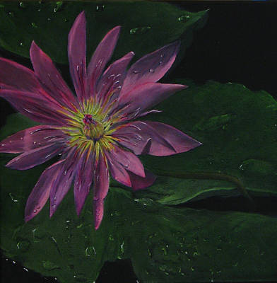 Painting - Hawaiian Water Lily - Pink by Sherry Robinson