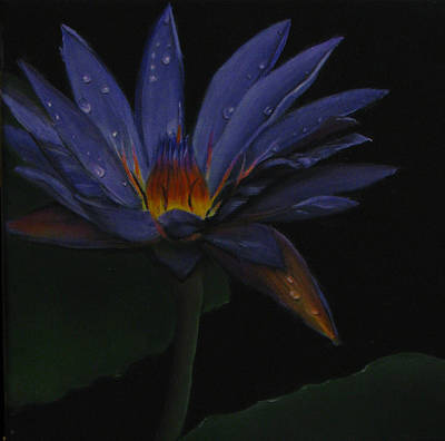 Painting - Hawaiian Water Lily - Purple by Sherry Robinson