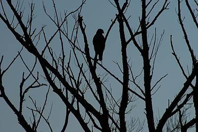 Photograph - Hawk 4 by Joe Faherty