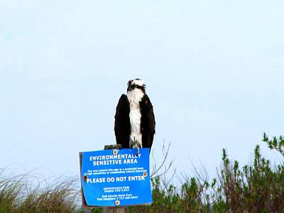 Environmental Photograph - Hawk Environmental by Marie Jamieson