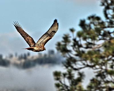 Red Tail Hawk Digital Art - Hawk In Flight by Don Mann