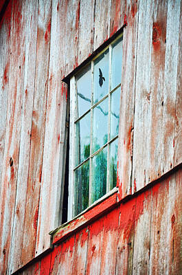 Photograph - Hawk In The Window by Emily Stauring