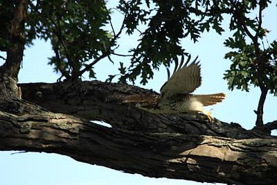Hawk On The Move Original by Dennis Pintoski