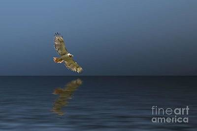 Photograph - Hawk Soaring Over Water by Pete Klinger
