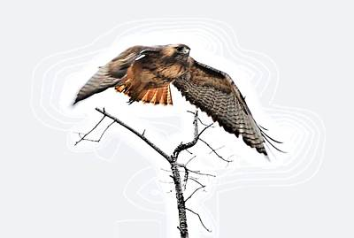 Red Tail Hawk Digital Art - Hawk Taking Flight by Don Mann