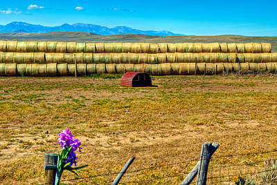 Photograph - Hay Bale Corsage by Harry Strharsky