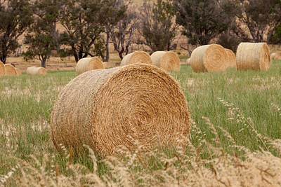 Photograph - Hay Bales by Michelle Wrighton