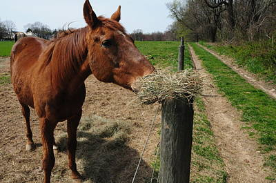 Hay Is For Horses Art Print by Bill Cannon