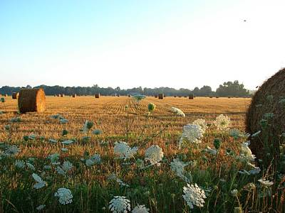 Mixed Media - Hay Rolls And Queen Annes Lace At Sunrise by Bruce Ritchie