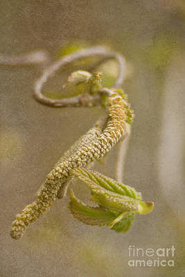 Photograph - Hazel Branch by Christine Amstutz