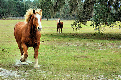 Draft Horses Photograph - He Was Running by Kristin Elmquist