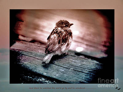 Photograph - He Watched The World Go By And He Wondered... by Karen Lewis