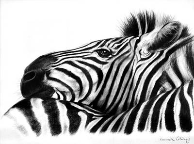 Wildlife Drawing - Head Rest by Lucinda Coldrey